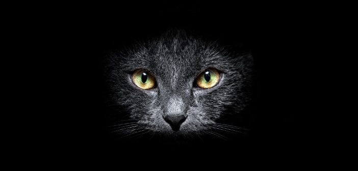 L'animale, oscuro mistero e muto dolore